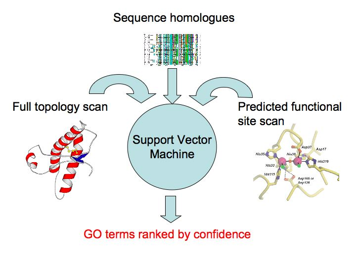 protein function Protein function prediction is a very important and challenging task in  bioinformatics protein is the most important molecule in our life.